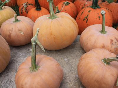 gourds, squash, pumpkins