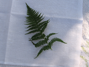 fern placement