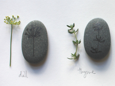 dill and thyme