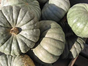 jarrahdale pumpkins